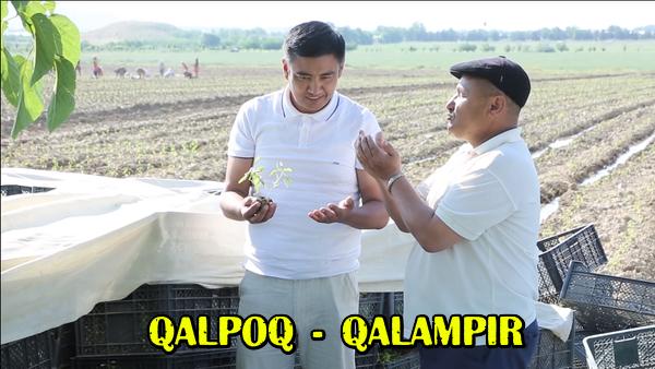 Qalpoq - Qalampir Калпок - Калампир (hajviy ko'rsatuv)